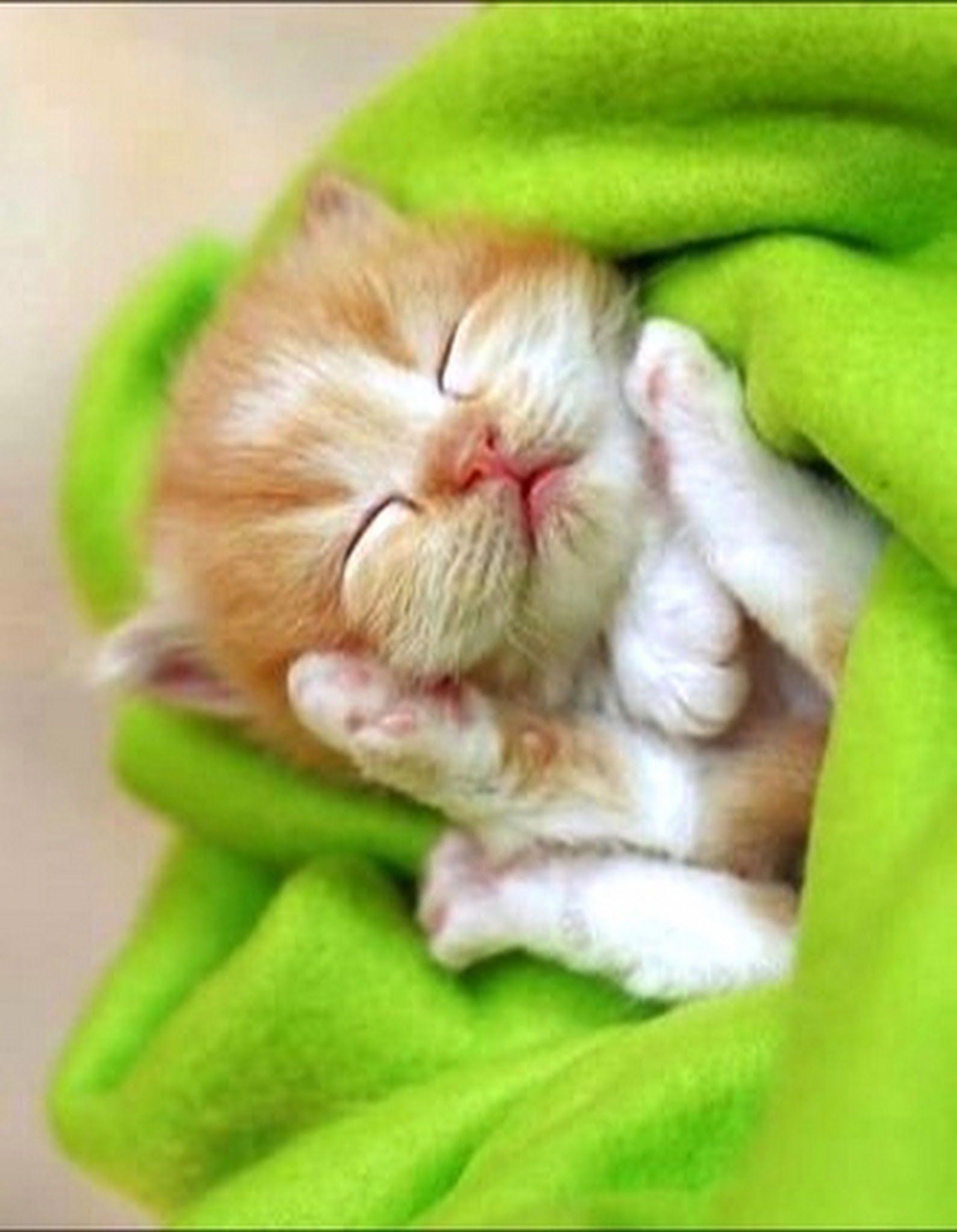 A bundle of joy catsandkittens Baby cats, Cute cats