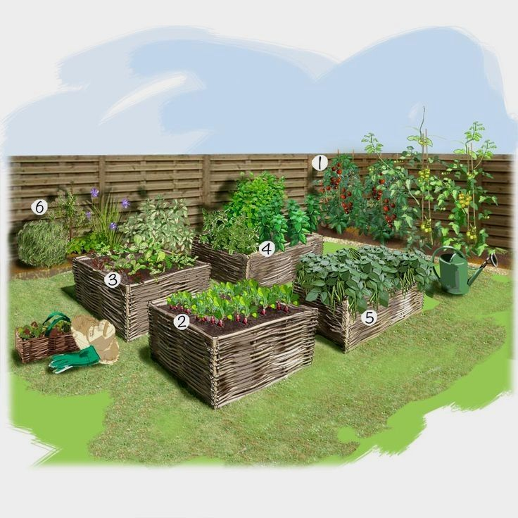Urban Vegetable Gardening For Beginners: How To Build A Small Vegetable Garden
