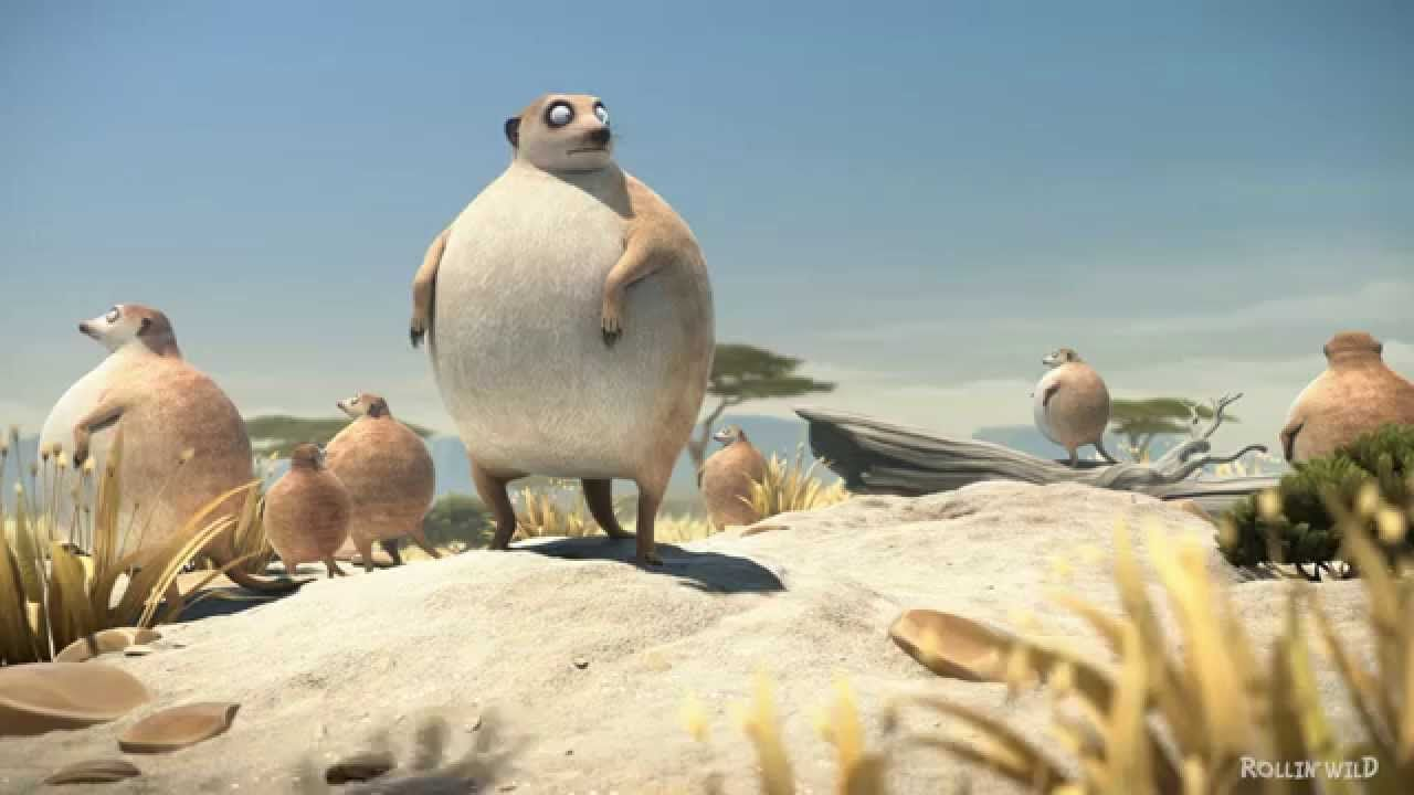Image of: Photos Rollin Safari meerkats What If Animals Were Round They Are The Coolest Check Them Out Rolling Wild Animation Pinterest Rollin Safari meerkats What If Animals Were Round They Are