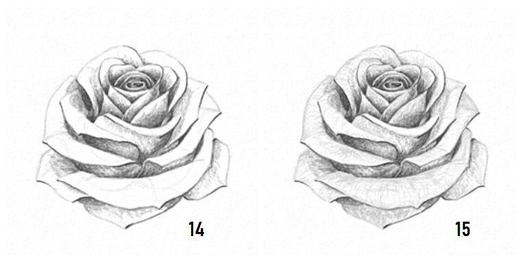 Come Disegnare Fiori Realistici Disegno A Matita Di Una Rosa
