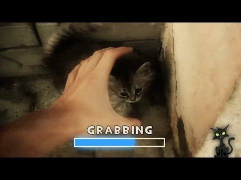 First Person Grab The Cat