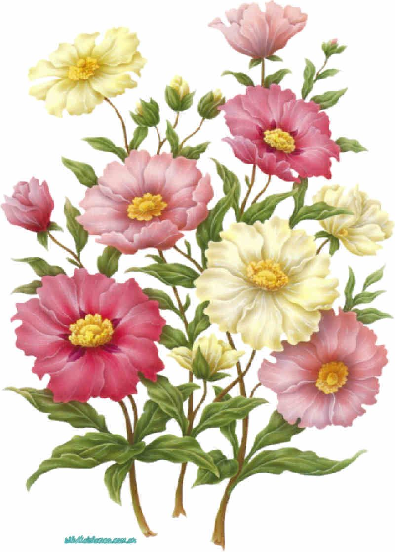 Flores de Primavera flor flores primavera flores de primavera