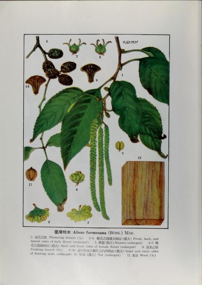 tai wan mu ben zhi wu tu zhi . xia juan 台湾木本植物图誌.下卷 - Biodiversity Heritage Library