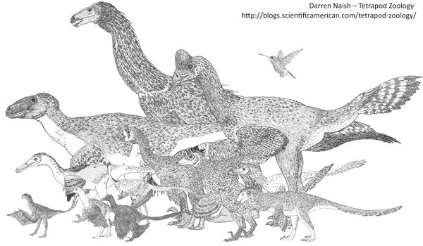 The evolutionary history of maniraptoran dinosaurswas complex, perhaps messy. But all is not lost...