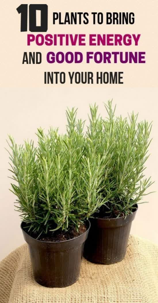 10 Plants To Bring Positive Energy And Good Fortune Into Your Home !