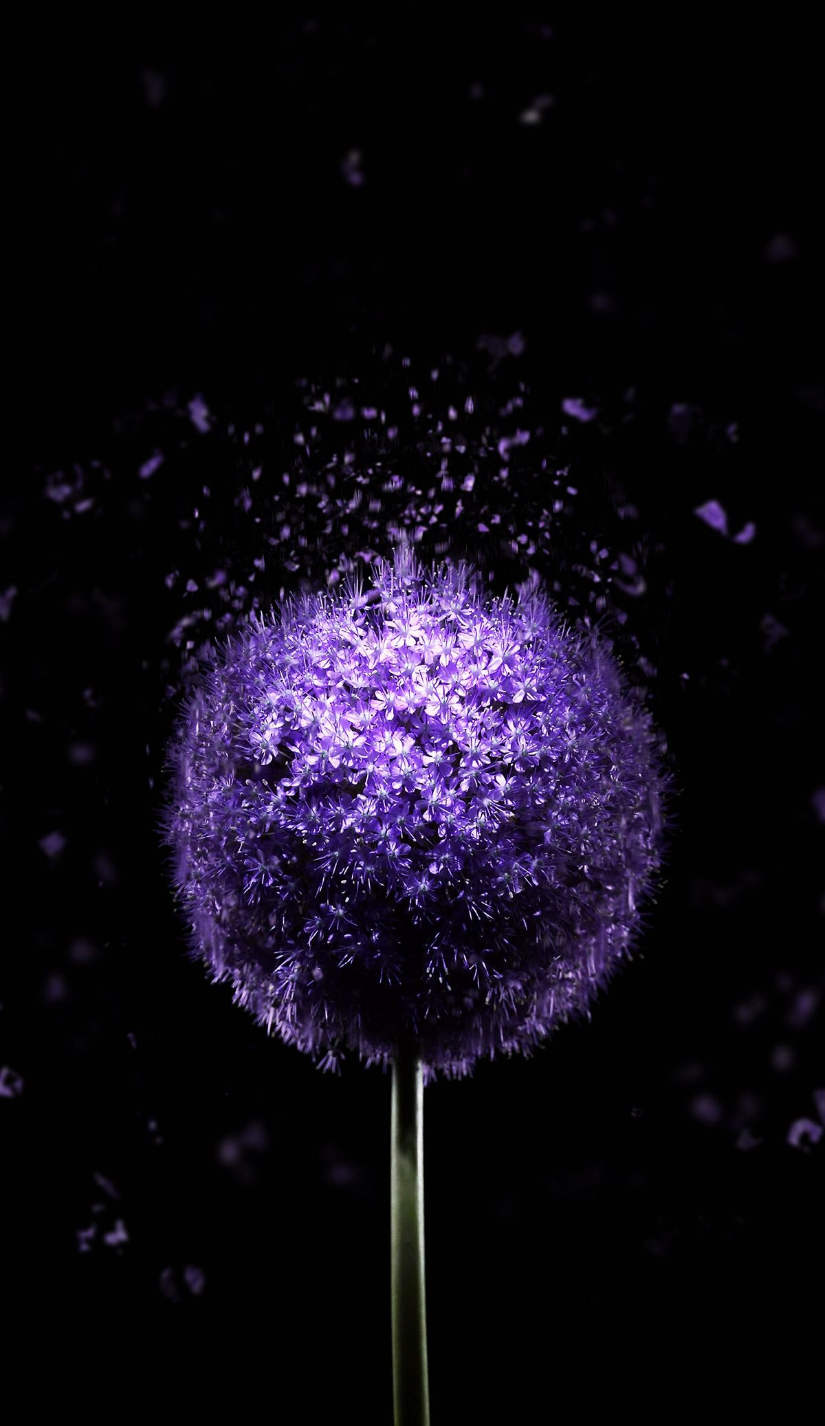 1200x2074 Violet Flower 4k Amoled Wallpaper In 2019 Nature