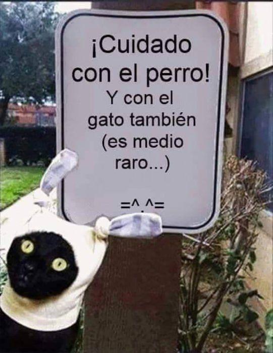 Cuando Los Gatos Te Traicionan Meme Gato Memes De Perros Chistosos Memes Perros