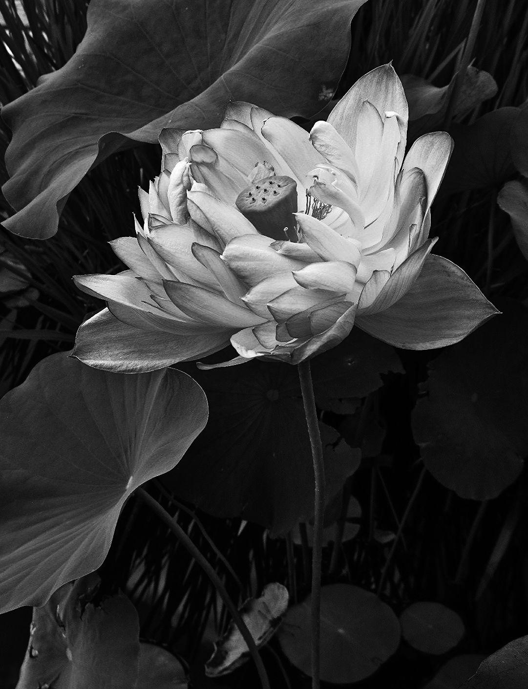 Lotus Thompson nude photos 2019