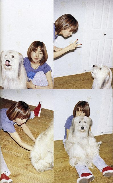 犬とaiko