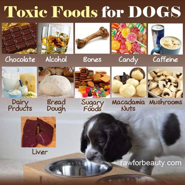 Chocolate Alcohol Candy Caffiene Dairy Products Bread Dough Macadamia Nuts Mushrooms Liver Dog Food Recipes Toxic Foods For Dogs Food Animals