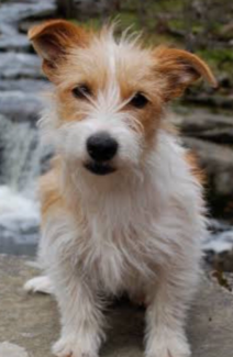 Gumtree Dogs And Puppies Puppies Pet Adoption
