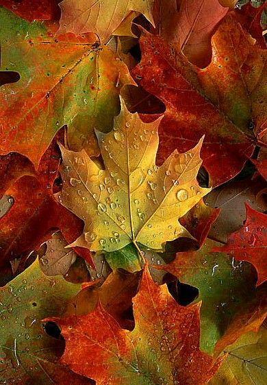 Autumn / fall #autumnscenery
