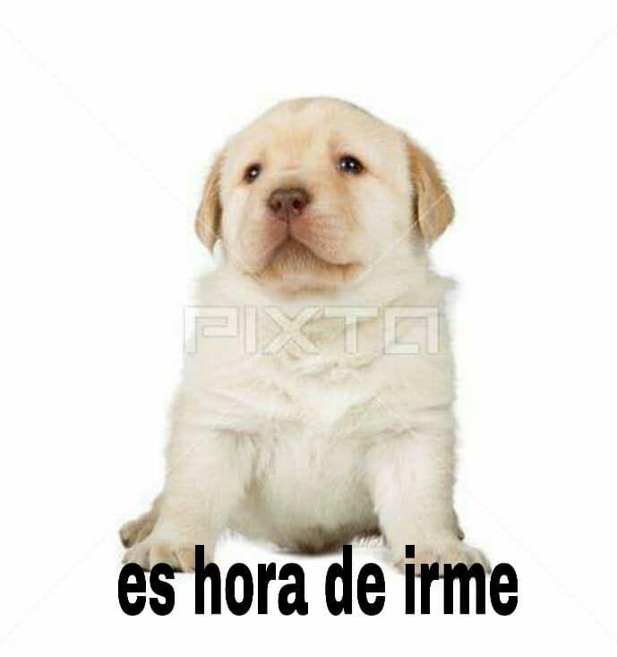 Pin De Astrid Beatriz En Memes Memes De Animales Divertidos Memes De Perros Chistosos Memes Perros