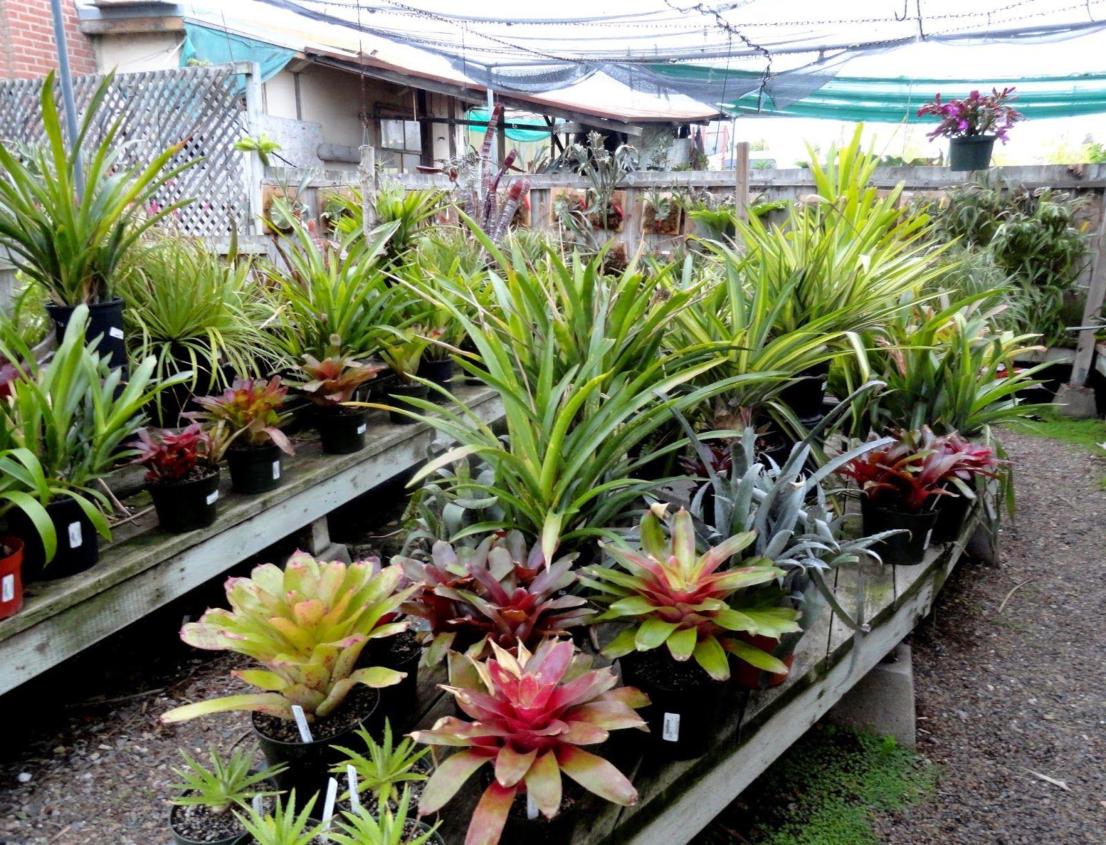 Danger Garden A Visit To Walter Andersen Nursery In San Go
