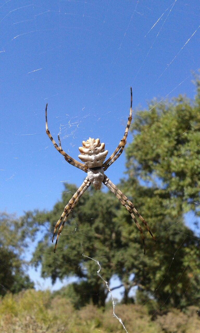 Pin By إبراهيم أديب On Spider Spider Insects