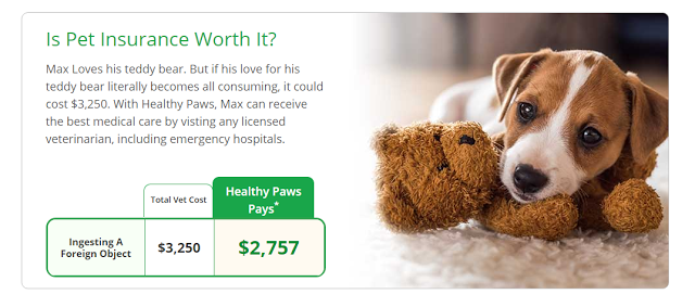 Healthy Paws Pet Insurance & Foundation give your pet