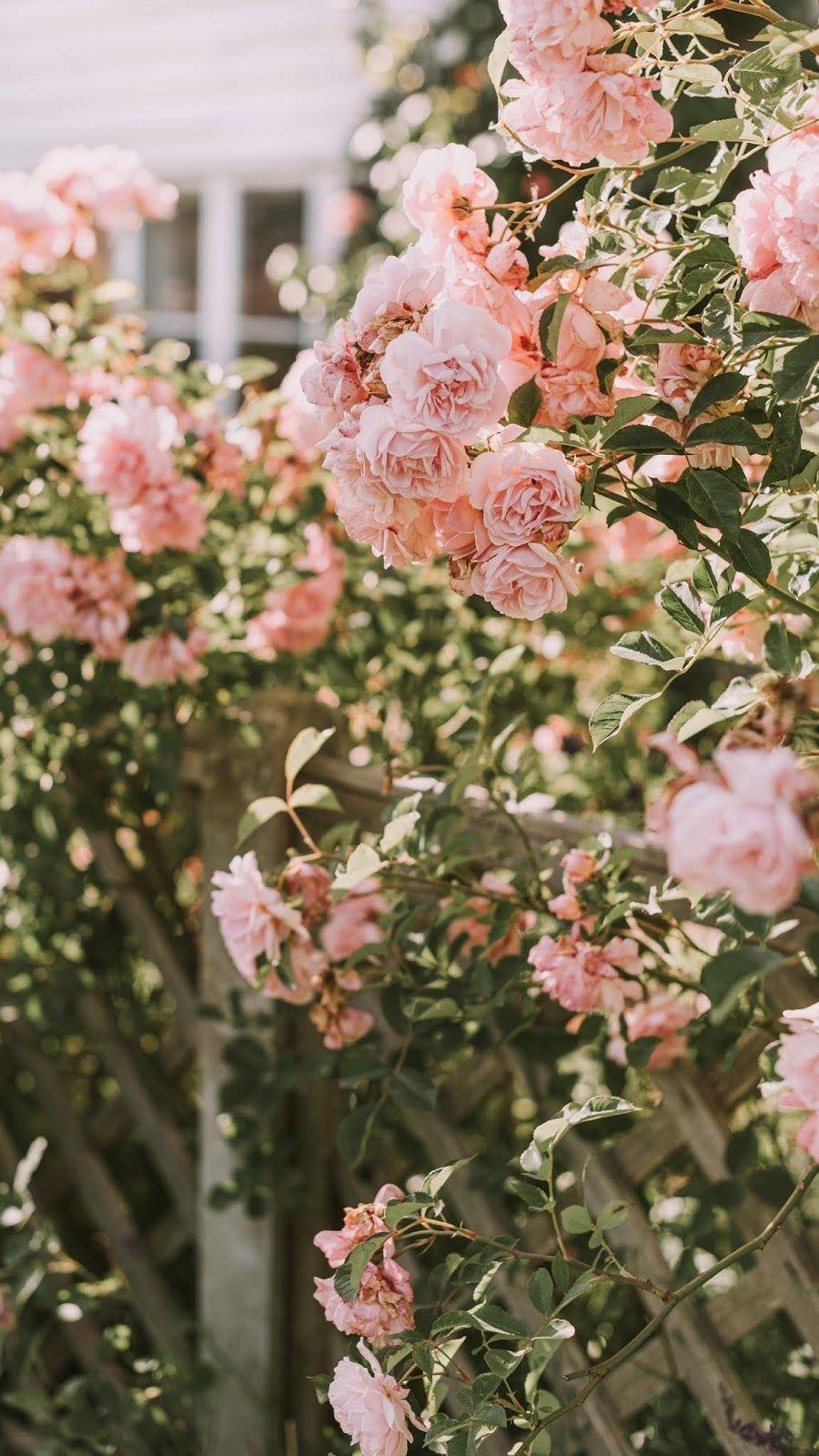 aesthetic vintage pink rose Flower phone wallpaper