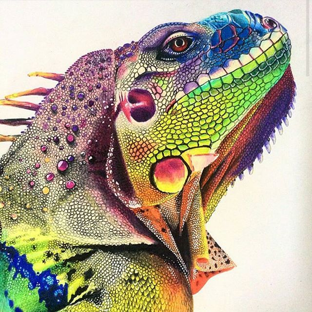 Amazing Colorful Chamilions: The Colors And Detail In This #iguana #drawing By