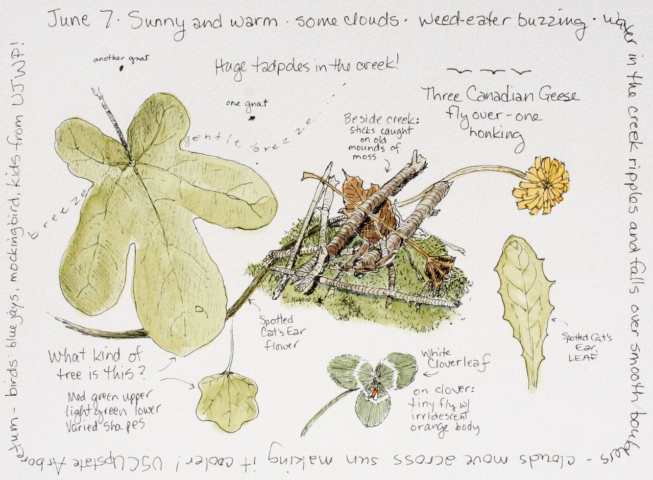 Middlewood Journal: Nature Journaling Classes today!