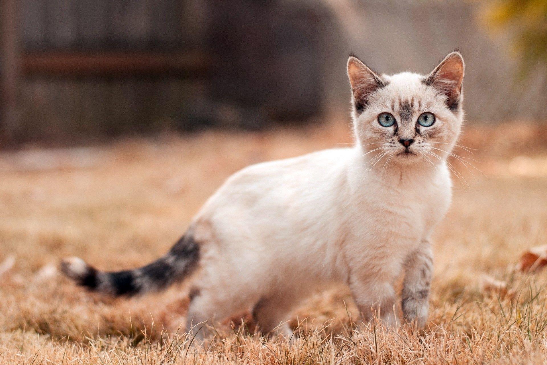 Kedinize Asla Yapmamanız Gereken 7 Şey