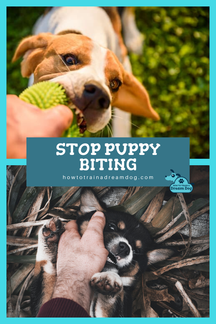 Stop Your Dog From Biting Puppies Puppy Biting Your Dog