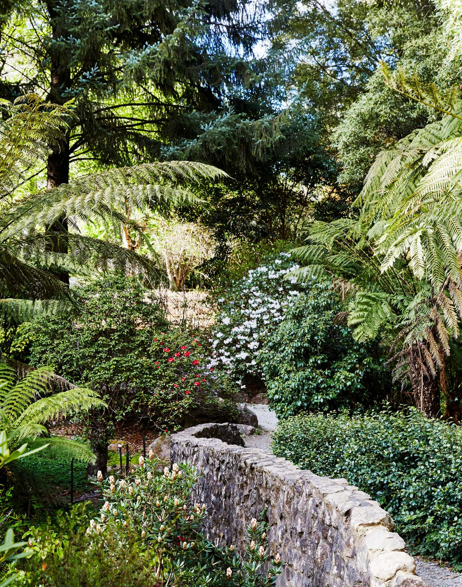 Visit The National Rhododendron Gardens In The Dandenong Ranges With