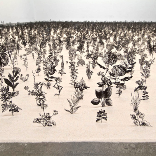 Zadok Ben David created this incredible installation using 12,000 cut steel botanical specimens modeled from old textbook illustrations, each embedded in a thin layer of sand.