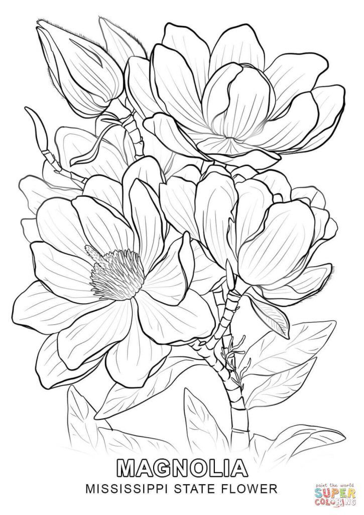 Limited Picture Of Flower To Color Mississippi State Coloring Page Pages Flower Coloring Pages Coloring Pages Flower Sketches