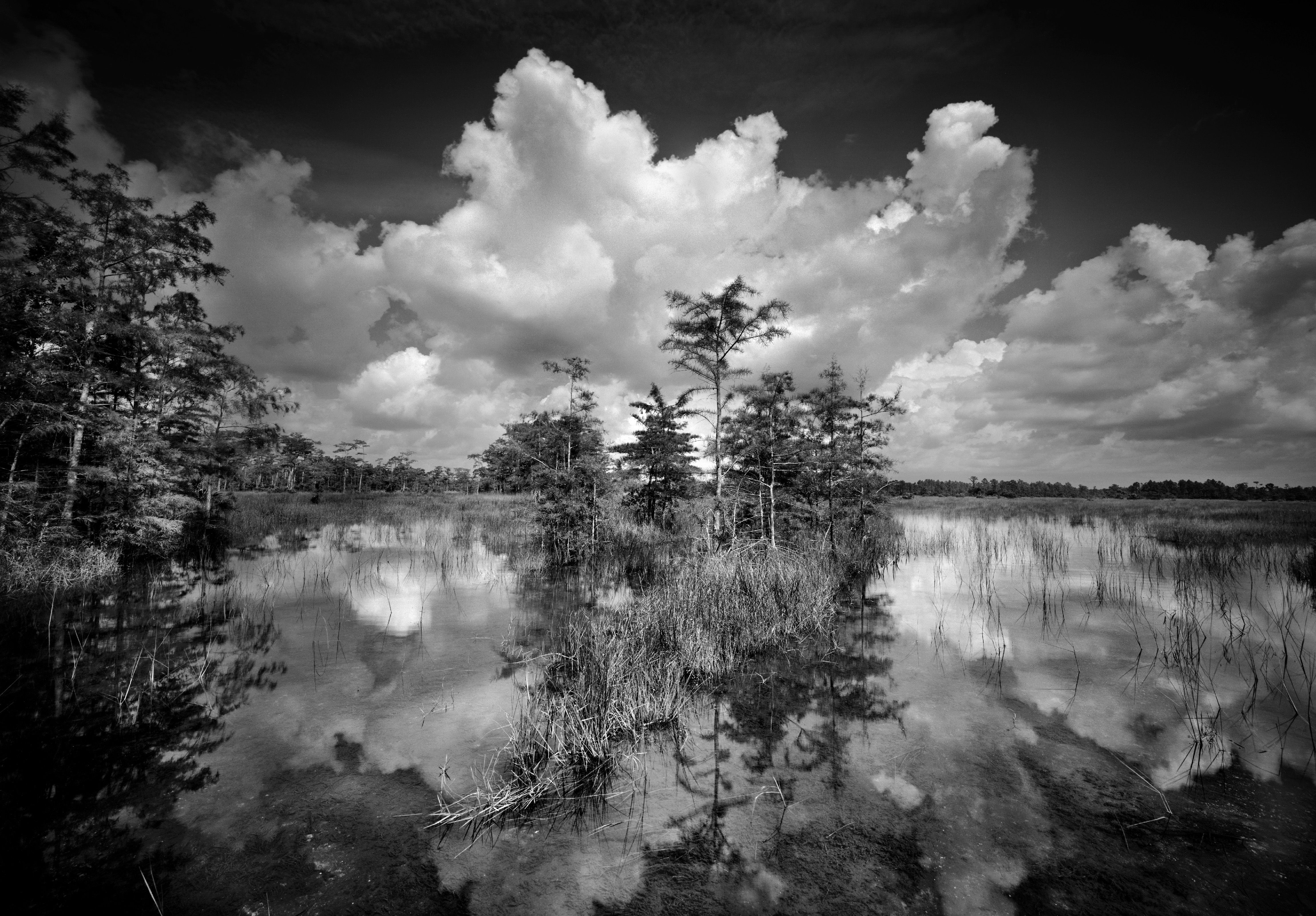 Florida S Photographer Clyde Butcher Black And White Landscape Nature Photography Art Photography