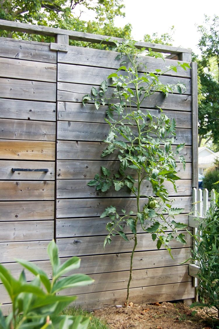I\'LL NEVER GROW TOMATOES ANY OTHER WAY THAN THIS | Pinterest ...
