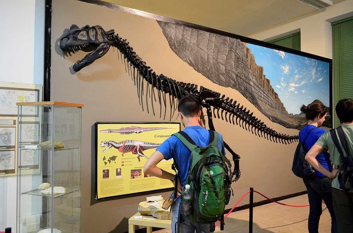 Dipartimento di Scienze della Terra e Geoambientali - Università di Bari - XIV Giornate di Paleontologia - Atti Convegno e Galleria Fotografica