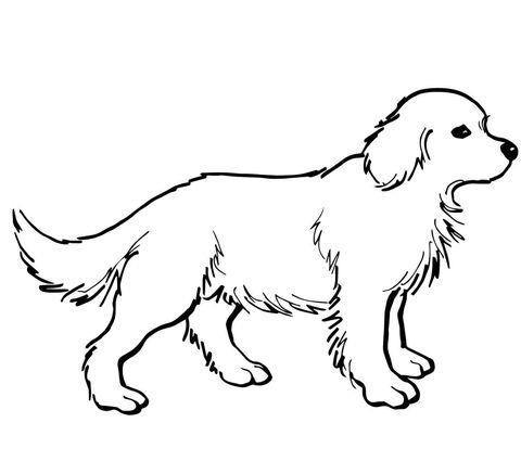 Make Golden Paste For Dogs Printable
