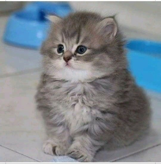Pin By Angel On Me In 2020 Kittens Cutest Cats And Kittens