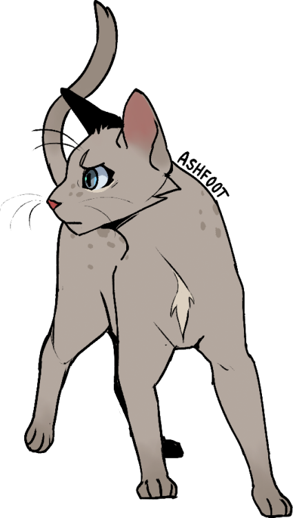 Warrior Cat Designs in 2020 Warrior cats fan art
