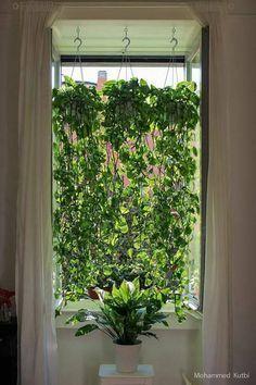 Wie Mohammed Kutbi, ein Architekt aus Mailand, Anlagen in einem minimalen Wohnraum und Fensteransicht realisiert. Pflanzen verwendet: – Golden Pothos (Epipremnum aureum) – Friedenslilie (Spathiphyllum #sichtschutzpflanzen