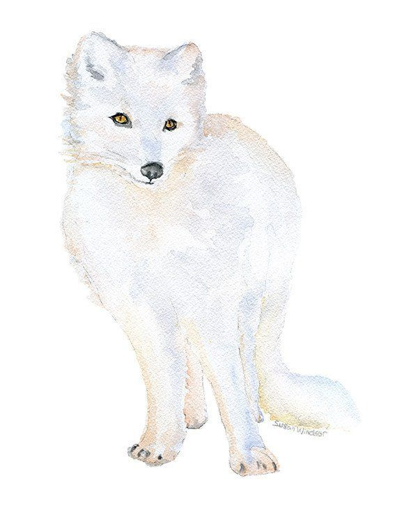 Arctic Fox Watercolor Watercolor Fox Arctic Fox Art