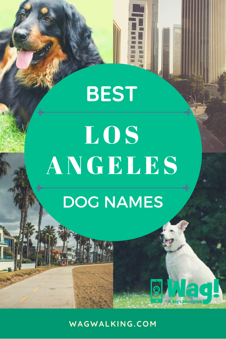 Los Angeles Dog Names Wag Best Dog Names Chiweenie Dogs California Dog