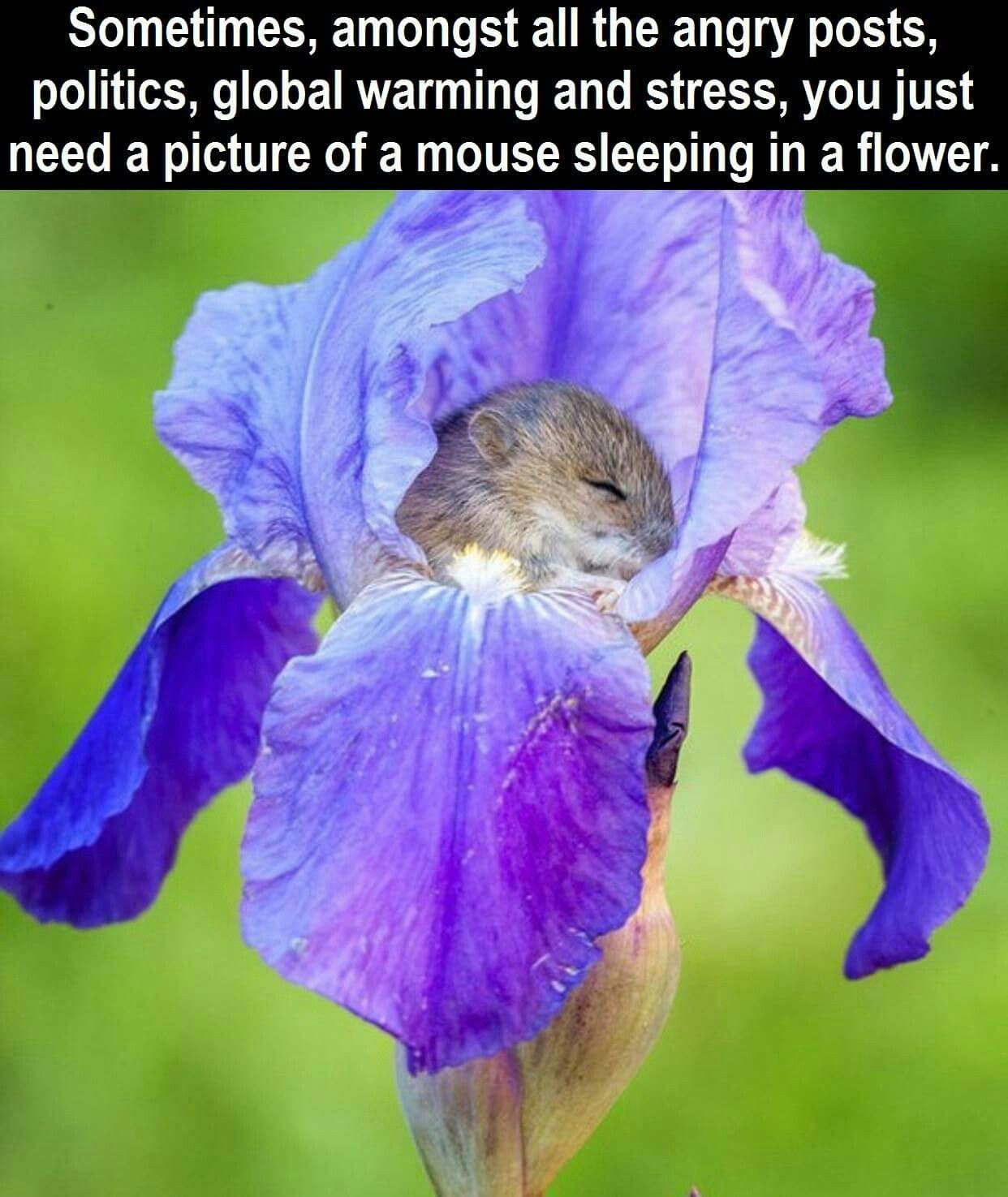 Sometimes you just need a mouse sleeping in a flower