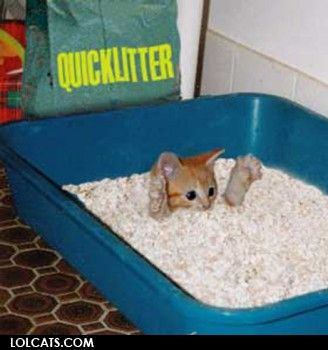 Quicklitter