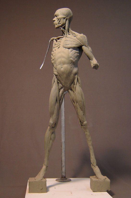 Écorché | Jiwoong Cheh | Escultura | Pinterest | Anatomía, Escultura ...