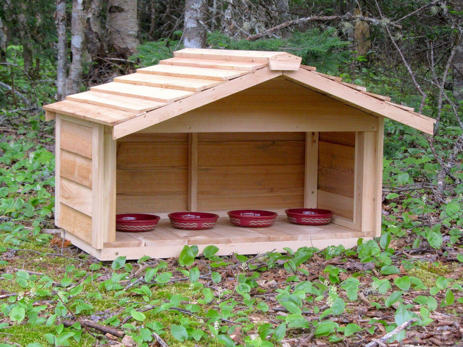 Outdoor cedar cat dog rabbit feral feeding station food