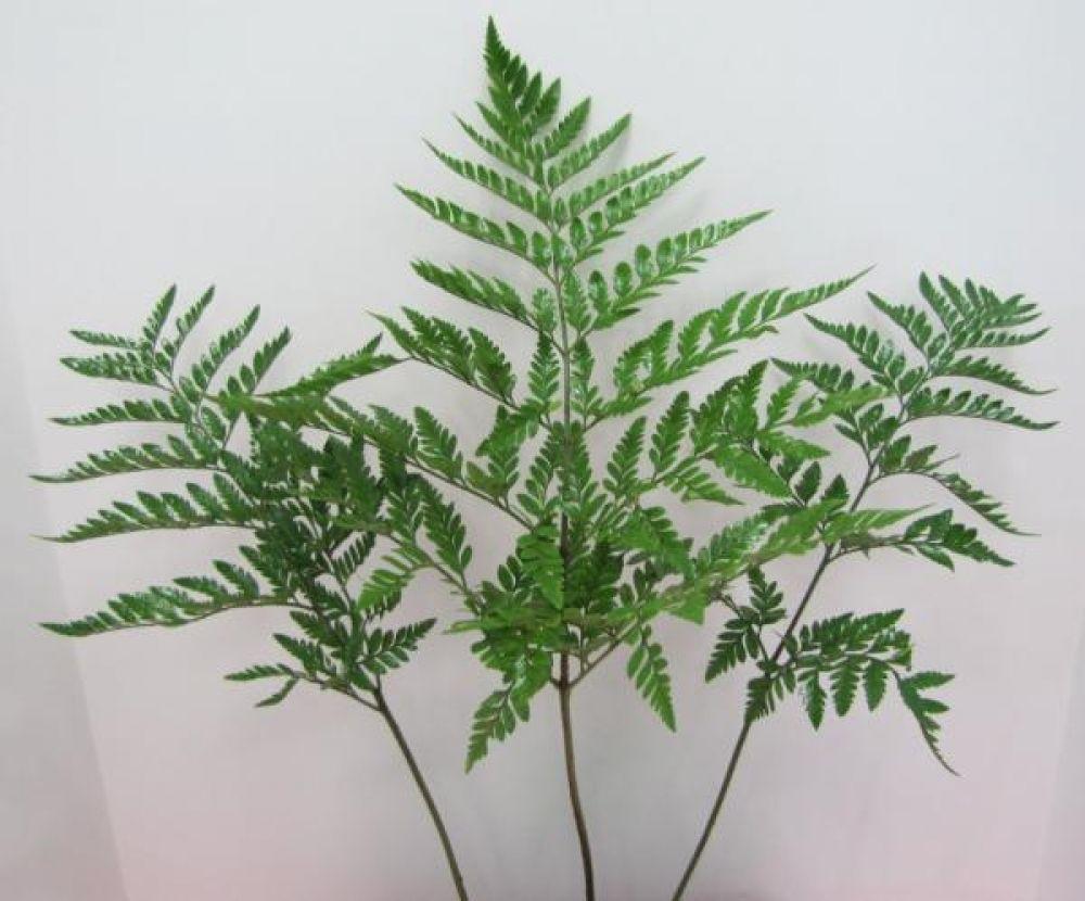 Leather leaf fern wedding flowers pinterest fern leaves and leather leaf fern izmirmasajfo