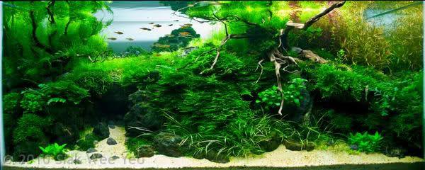 My Wifes 6x2x2 Axolotl Aquascape Step By Step