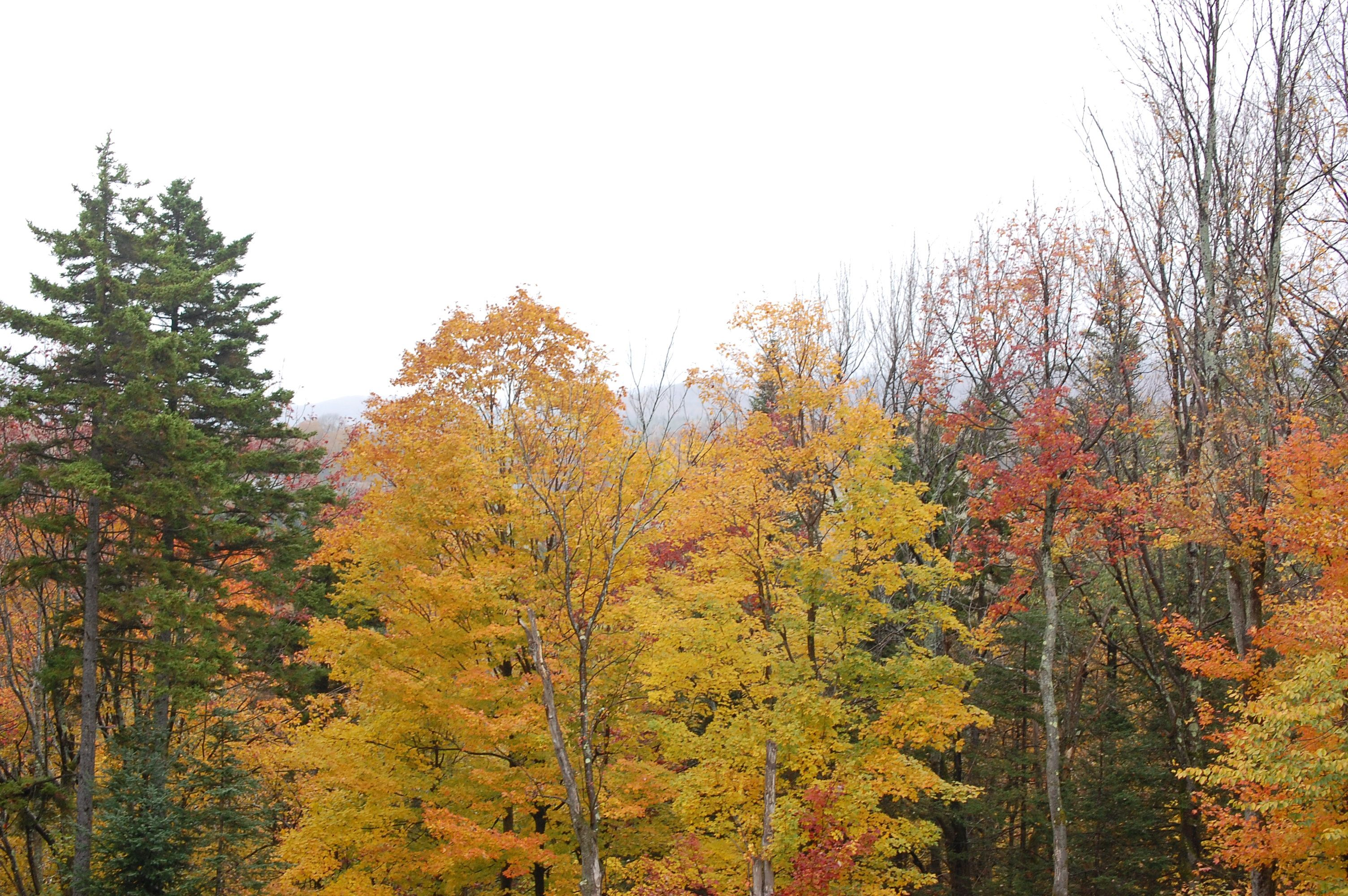 Fall Colors Mount Snow Vacation Destinations Vermont