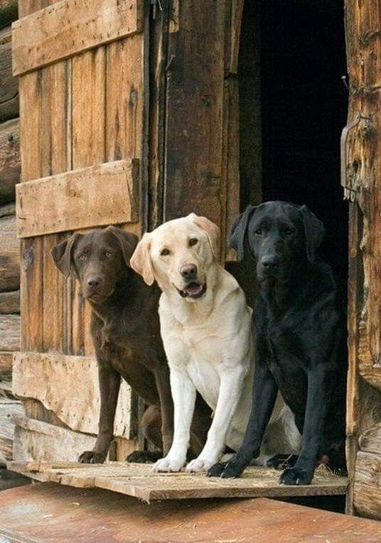Pin Von Barbara Rathmanner Auf Bezauberndes Trio Hunderassen Hunde Susseste Haustiere