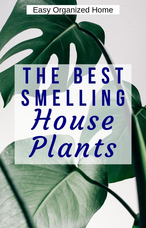 House Plants to Make Your Home Smell Good