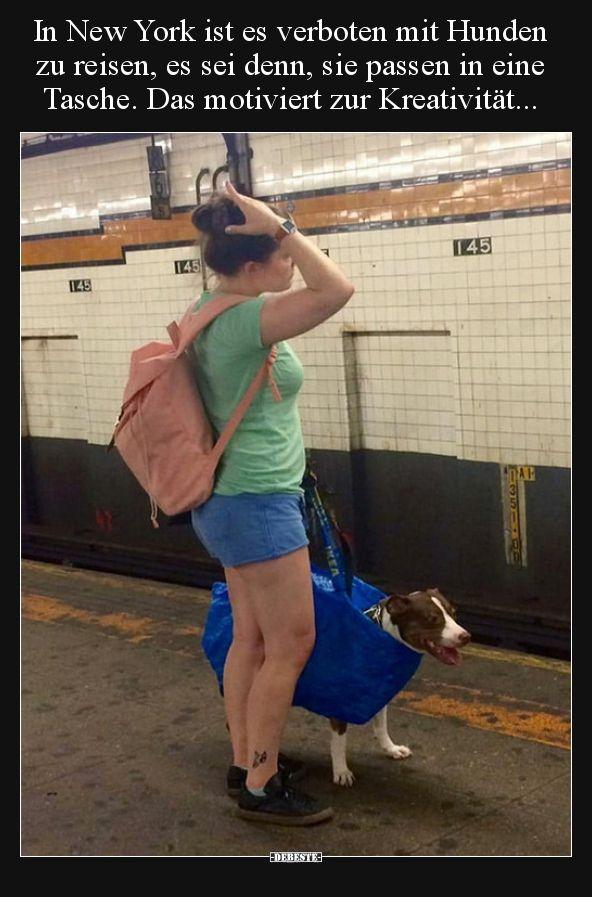 Photo of In New York ist es verboten, mit Hunden zu reisen, es sei denn, es ist .. | Lustige Bilder, spr …