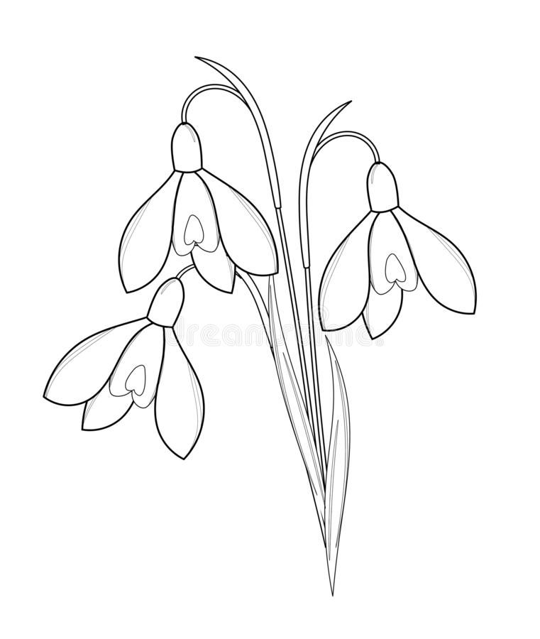 Bouquet Of Snowdrops Outline Drawing Royalty Free Illustration Outline Drawings Pretty Flower Drawing Flower Outline
