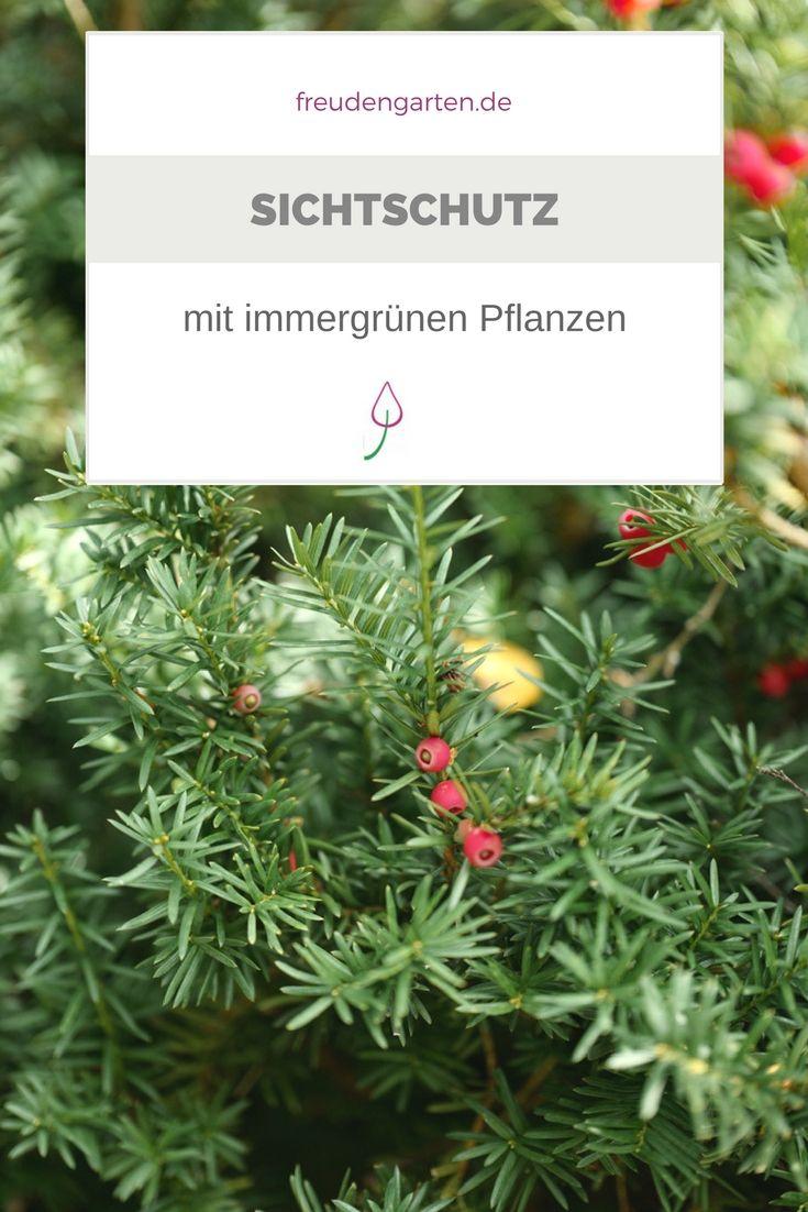 6 Beliebte Immergrune Pflanzen Fur Den Garten Gardening