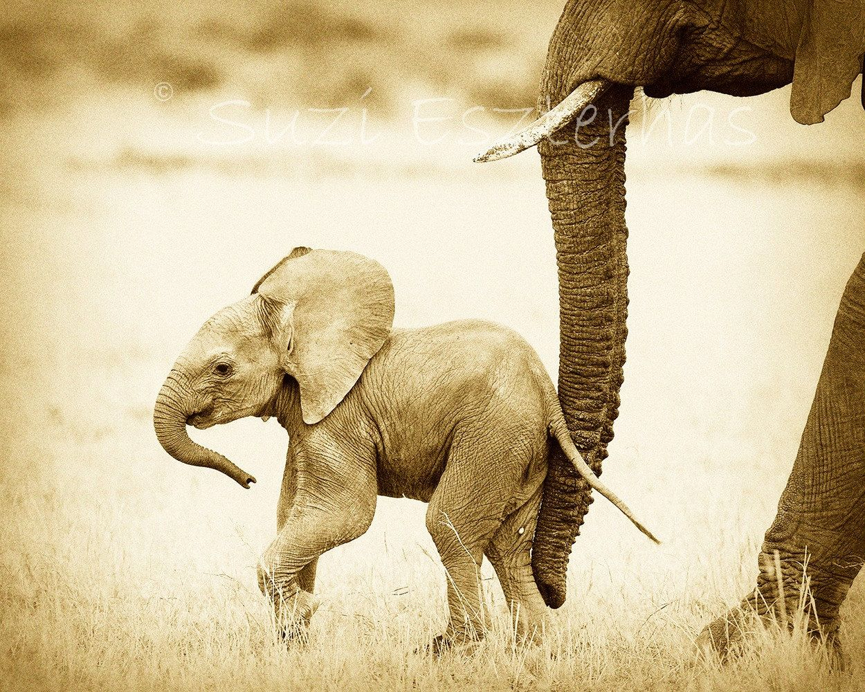 Vintage Baby Elephant Photo, African Safari, Baby Animals, Sepia ...